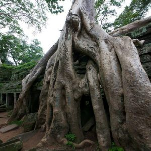 Angkor Watin Temppeli 845 Canvas-taulu
