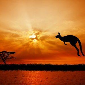 Australia Kenguru 270 Canvas-taulu
