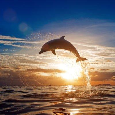 Delfiinin Hyppy 1652 Canvas-taulu