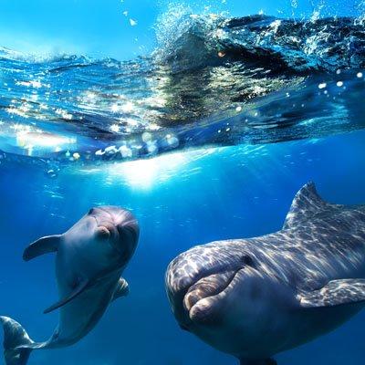 Delfiinit 1615 Canvas-taulu