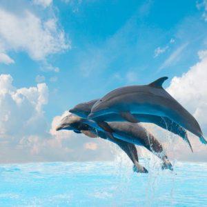 Delfiinit 302 Canvas-taulu