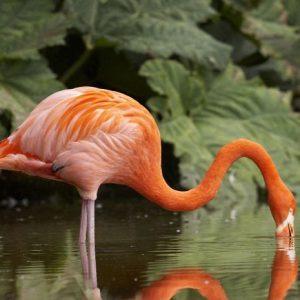 Flamingo 498 Canvas-taulu